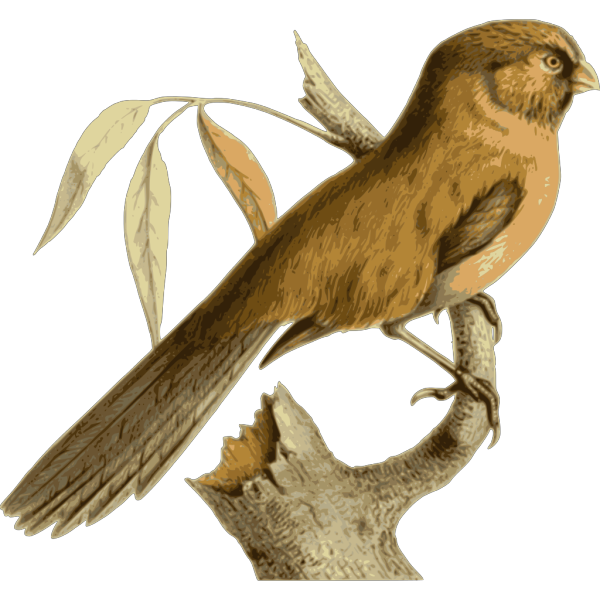 Paradoxornis Unicolor PNG icons