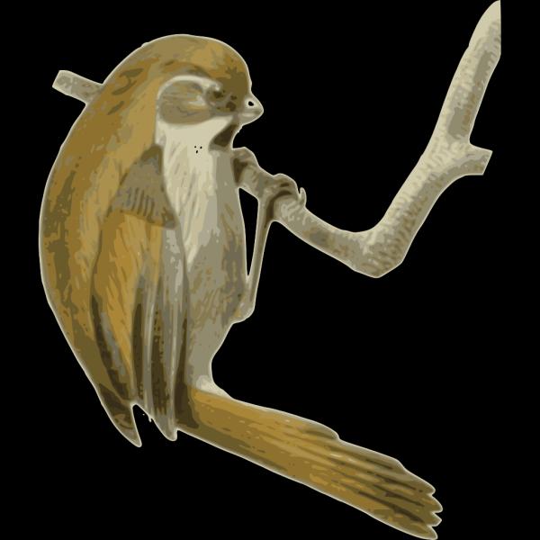 Paradoxornis Verreauxi PNG images