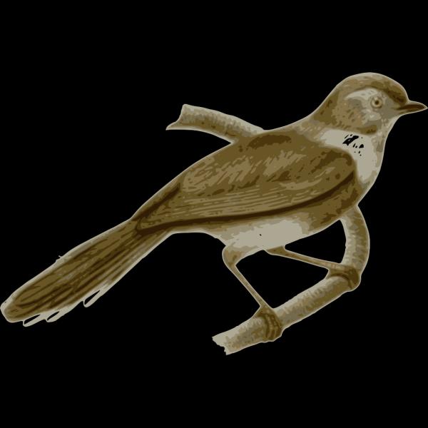 Aegithalos Fuliginosus PNG images