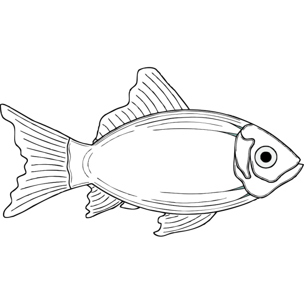 Cod Fish, White PNG Clip art