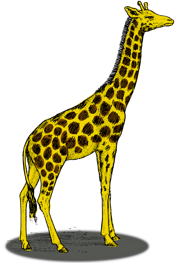 Cartoon Giraffe PNG Clip art