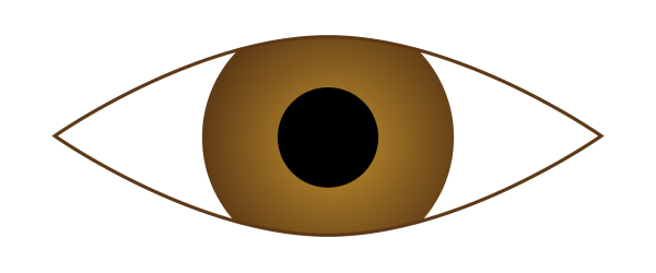 Ecuabron Brown Eye PNG Clip art