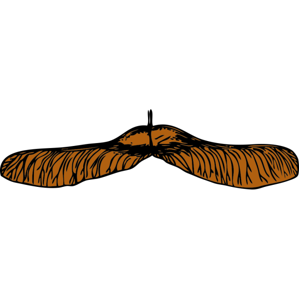 Maple Seed PNG Clip art