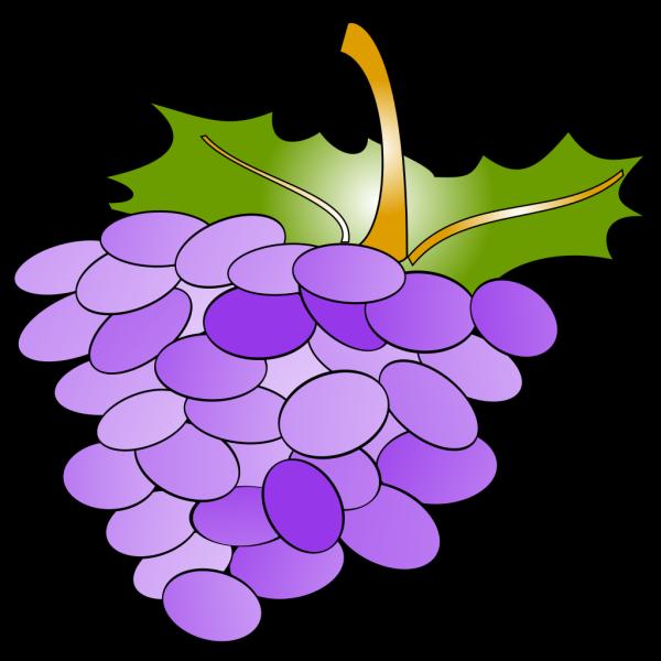 Grapes Blue PNG Clip art