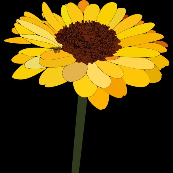 Sunflower PNG Clip art