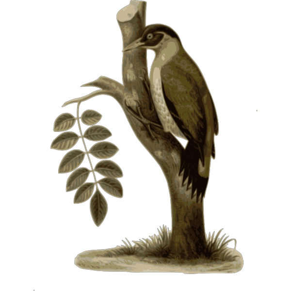 Picus Erythropygius PNG Clip art
