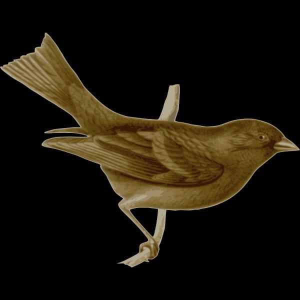 Carpodacus Vinaceus Female PNG Clip art