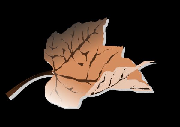 Brown PNG Clip art