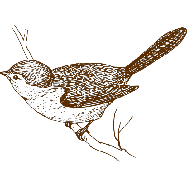 Brown Bird On Branch PNG Clip art
