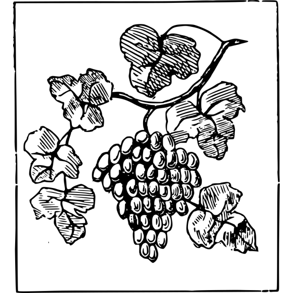 Brown Grapes PNG Clip art