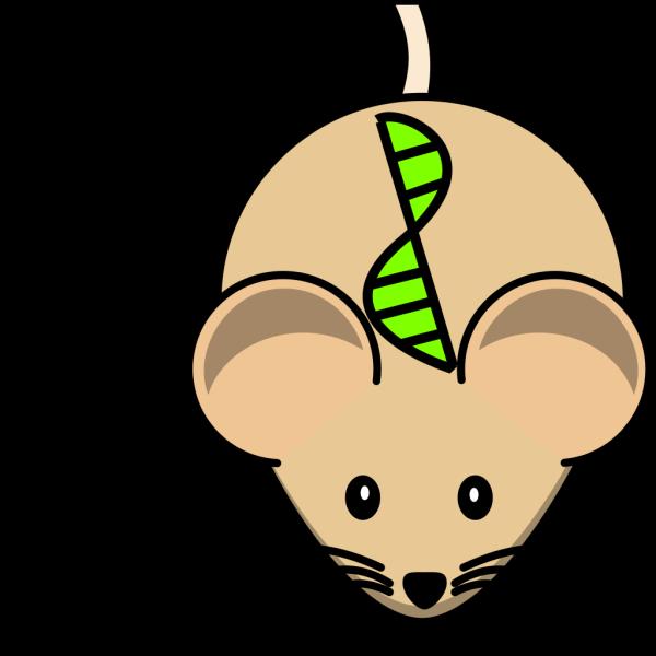 Transgenic Mouse PNG Clip art