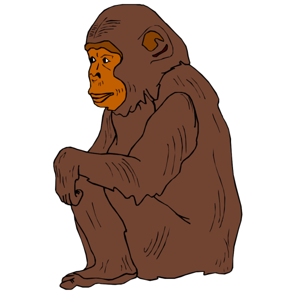 Sitting Chimp PNG images