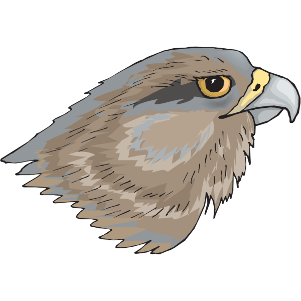 Brown Hawk Head PNG Clip art