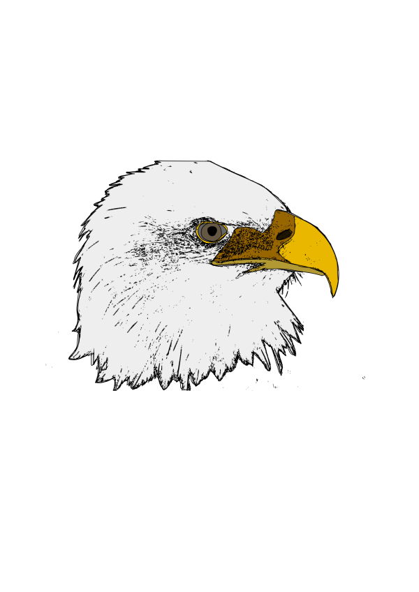 Brown Eagle Head Art PNG Clip art