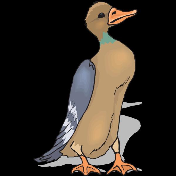 Brown Standing Duck PNG Clip art
