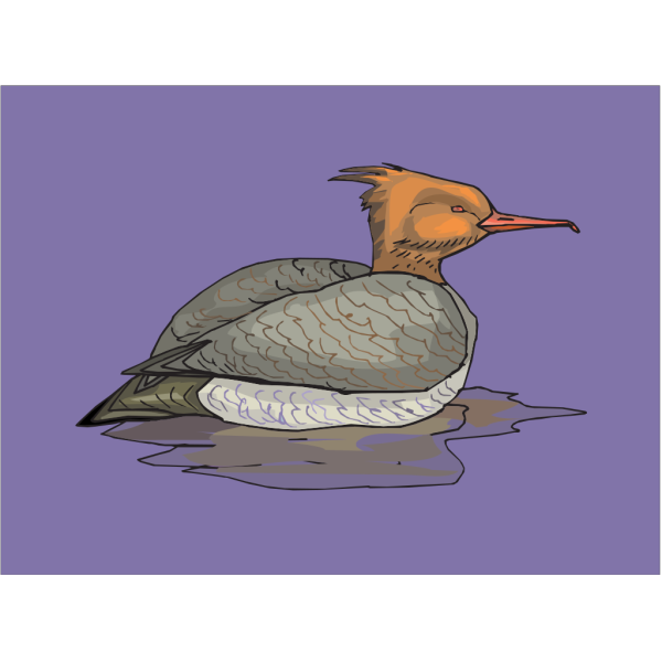 Orange And Brown Swimming Duck PNG Clip art