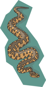 Snake With Teal Background Clip art