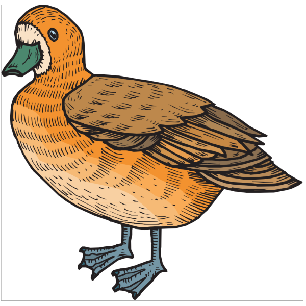 Orange And Brown Duck PNG Clip art