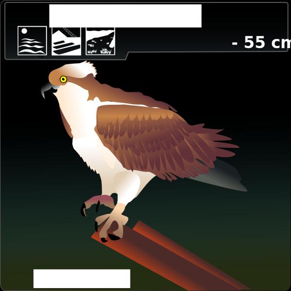 Falcon PNG Clip art