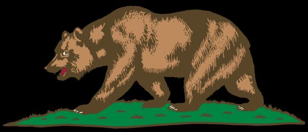 Bear Head PNG Clip art