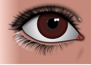 Female Brown Eye PNG clipart