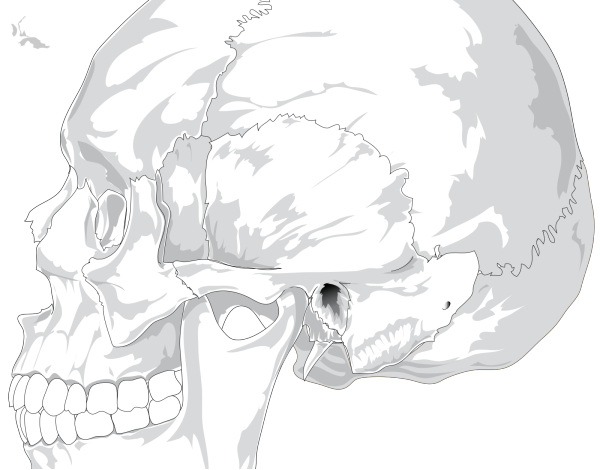 Animal Side View PNG Clip art