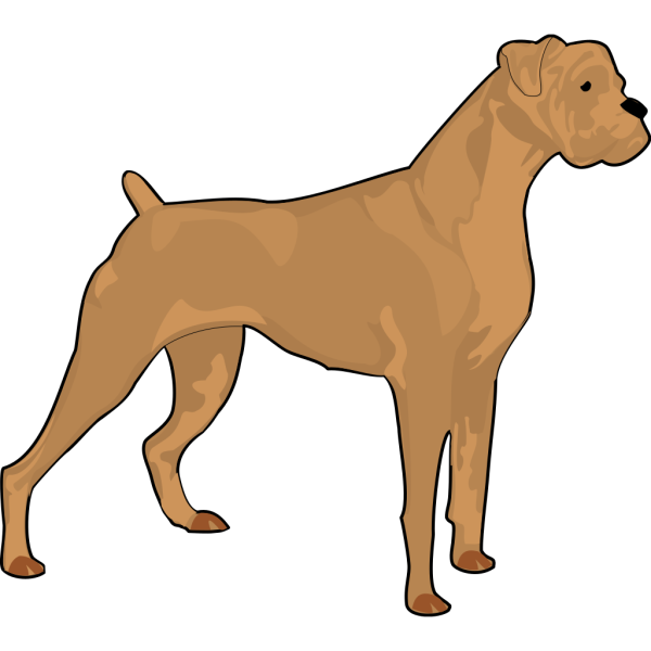Brown Boxer PNG images