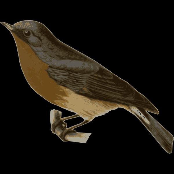 Ficedula Hodgsonii PNG icon