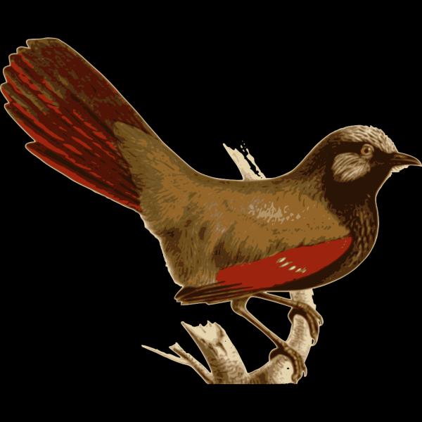 Garrulax Formosus PNG images