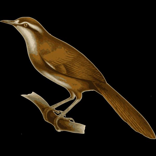 Megalurulus Mariei PNG Clip art