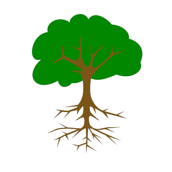 Bare Tree With Roots PNG Clip art
