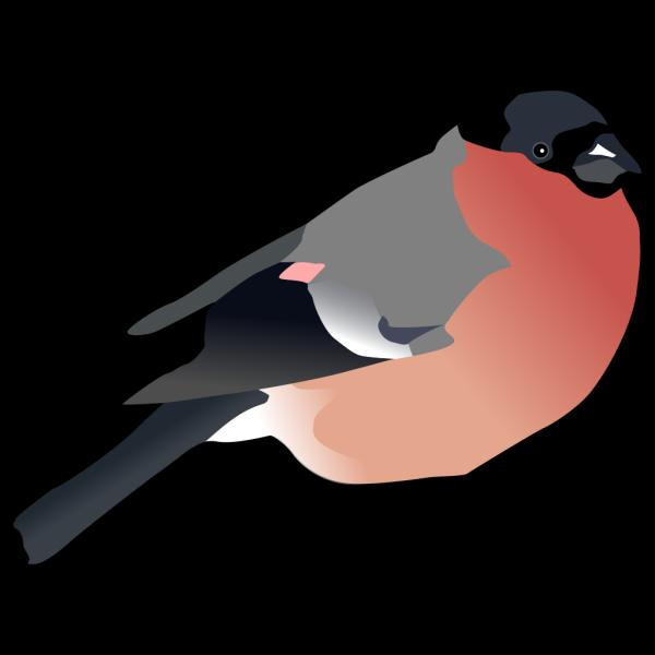 Eurasian Bullfinch PNG Clip art