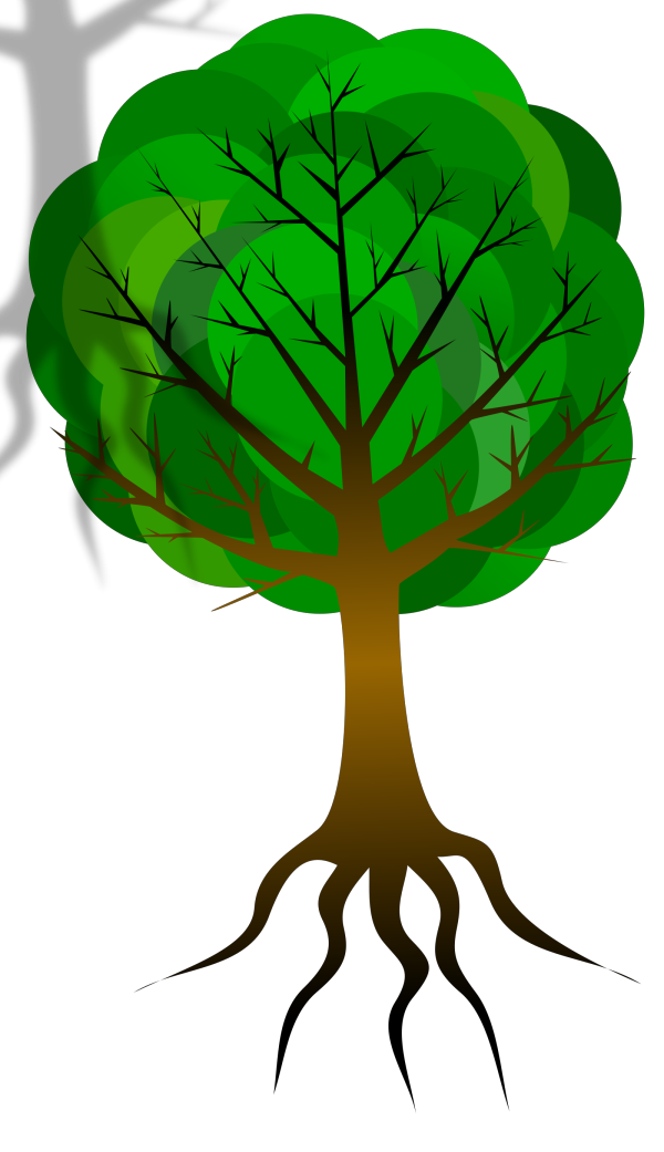 Tree Branches PNG Clip art