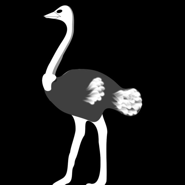 Ostrich PNG Clip art