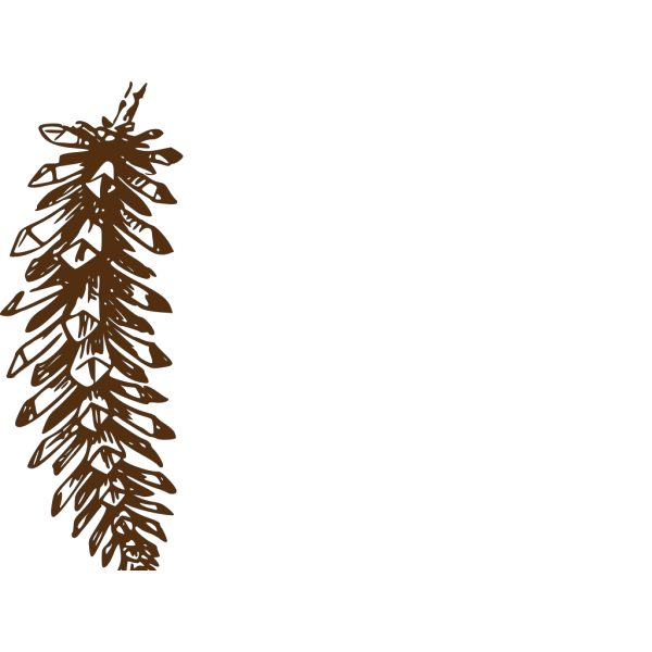 Pinecone PNG Clip art