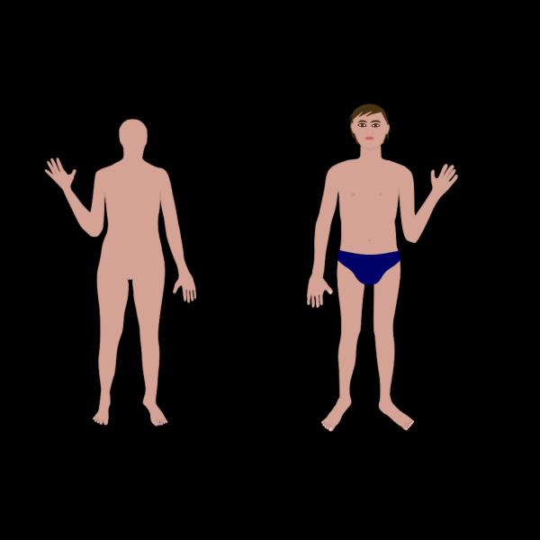 Human Body B PNG Clip art
