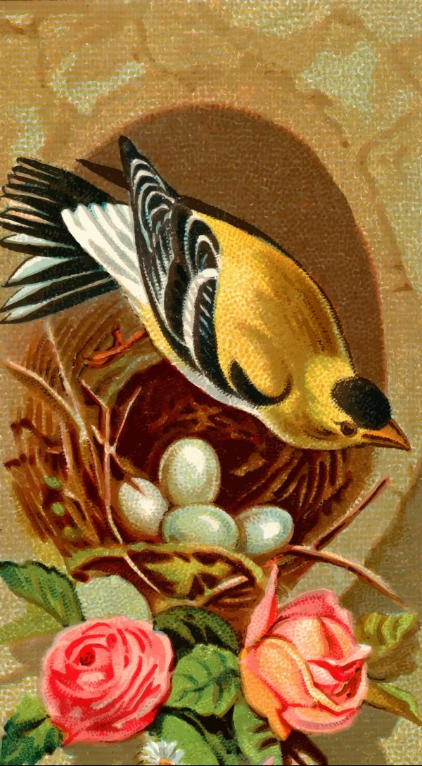 Nest PNG clipart