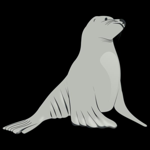 Sea Lion PNG images