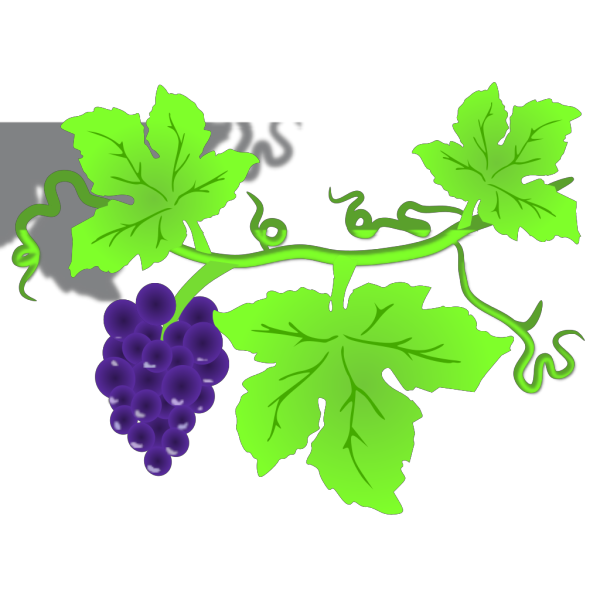 Grape Vine PNG images