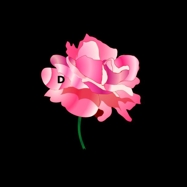 Donate Button 2 PNG Clip art