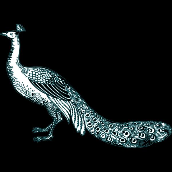 Peacock Dancing Cartoon Clipart Vector - FriendlyStock