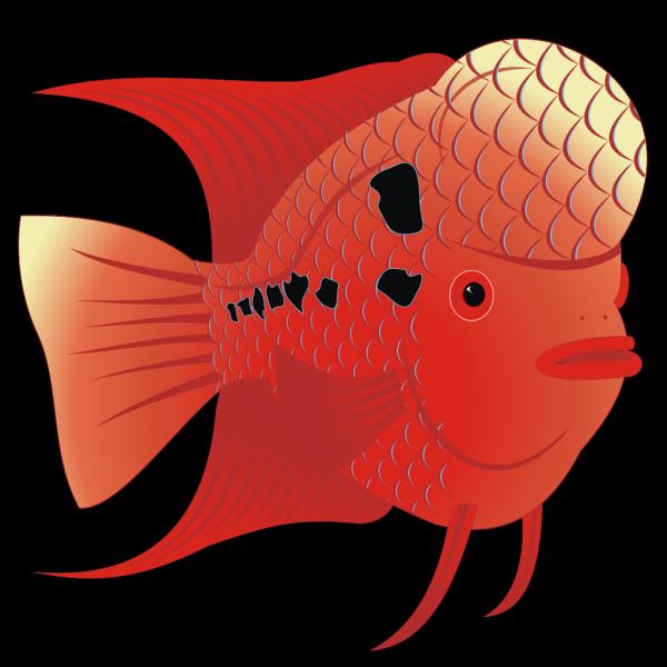 Flowerhorn Fish PNG Clip art