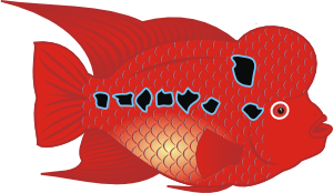 Flower Horn Fish PNG images