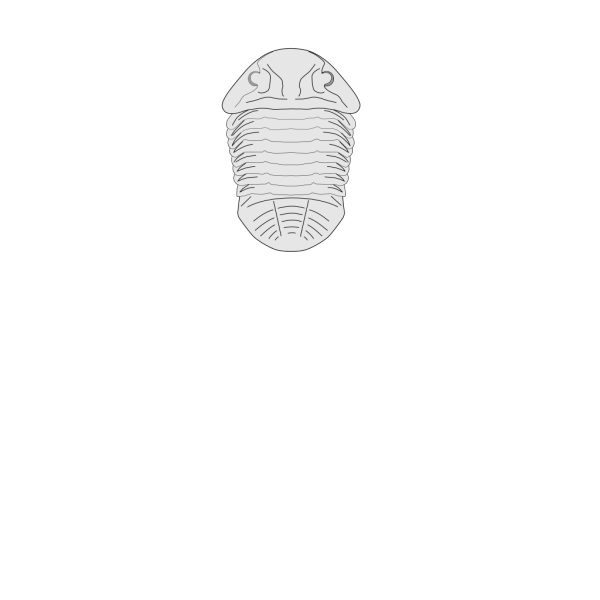 Fossil Of The Asaphus Species PNG Clip art