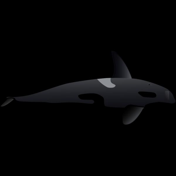 Orca PNG Clip art