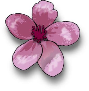 Blossom PNG images