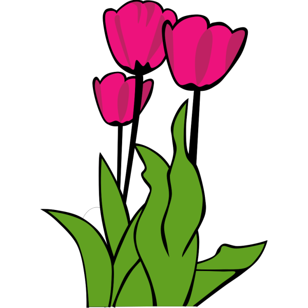 Tulips In Bloom PNG images
