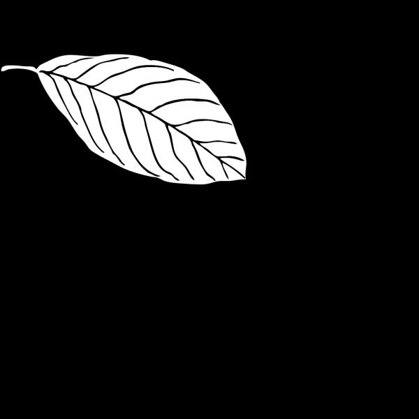 Oak Leaf PNG images