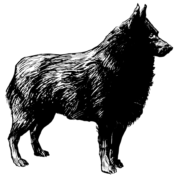 Schipperke PNG Clip art