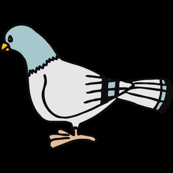 Pigeon 1 PNG Clip art